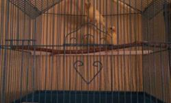 young canaries 1 year old male and female This ad was posted with the eBay Classifieds mobile app.