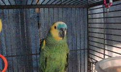 Beautiful, sweet spectacled amazon (sometimes called the white front amazon) needs a new home! His name is Meeka. He comes with his cage and a play perch. He's a little shy but doesn't bite. He can talk some and mimic some and is young enough to learn