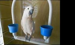 """My name is Lulu I am a feather picker. I do say """"Step up"""" I love to play with my food and toys - putting things on top of my head and catching them as they fall off. I am fun to watch. 832-689-6510. I eat seeds, pellets and fresh veggies/fruit, eggs, and"""