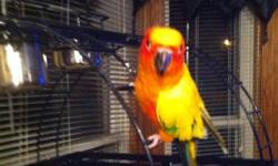 I HAVE A SUN CONCURE HES 7 MONTHS OLD THE IS LOOKING FOR A NEW HOME IM ASKING FOR $350.00 WITH HIM AND THE CAGE OR $250.00 HIM ALONE ANY QUESTION FEEL FREE TO CALL ME AT 585-369-9799