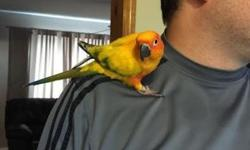 The bird is 3 years old, and his name is Jack. He is registered and i have all the certificates. You will be a legal owner. We no longer can keep him because my daughter has asthma. I will give you a cage and the starter food. He eats pellets all by