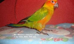 I have 2 sun conure babies available! So sweet and tame! Ready to go home now! This ad was posted with the eBay Classifieds mobile app.