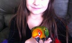 We have beautiful baby sun conures available! $350 each baby & we can DNA for $25 extra if you would like! We also ship for $125 extra and that includes a brand new carrier! We are located in Northeast PA 18058. Any questions please feel free to contact