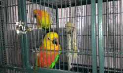 Sun Conure is a proven Female between 10-12 yrs of age. Male Jenday is 3 yrs old and used to be a pet, but now is in with the Conure. They get fed seed's, fresh fruits and veg's, zupreem, nuts, animal crackers, pasta, lentils. If you are looking for