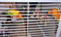 HI I HAVE SOME BIRDS THAT NBEED DOWNSIZING DUE TO MOVE NEW HOUSE IN TWO WEEKS 1 PAIR SUN CONURES $350.00 OR WITH CAGE $400.00 1 PAIR PARROTLETS $150.00 YELLOW AND LIGHT BLUE/WHITE 3 PAIR PARAKEETS $50.00 OR WITH CAGE $100.00 ANY QUESTION FEEL FREE EMAIL