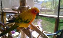 Very friendly, loves to hang out with you or on his play gym. Loves to dance and cuddle. He is starting to throw kisses. The bird comes with cage and play gym. $275 firm. Call (845) 782-6815