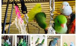 I have this beautiful tame SunConure.. Very friendly call 619-980-5909