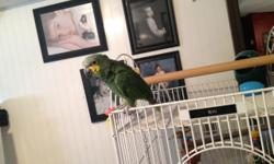 We have a handsome Amazon that is a very good talker, sings and also flys to you when called :). He will even talk while in flight!!! A very awesome bird. Has not been DNA'd. His cage is white and very nice. He comes with cage and toys and any food he may