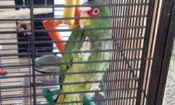 This is Abadox. Hes been in the family along time and has been passed down to me. Unfortunately our two dogs do not do well with the bird in our home. And its not fair to abadox. Abadox will come with a tall about 5foot cage. $100 worth of brand new toys.