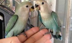 I have two tame peachface lovebirds that are weaned and eating seeds on their own for 55-60.00 each. I have alao a few friendly peachface lovebird that are being fed times a day. They are tame and come up to you. They love to be with people. Selling for