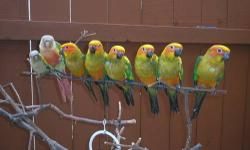 tamed and handfed parrotlets, sun conures and kakariki for sales. Call me ONLY @ 619- 316-1007 ask for Lernel for more info,,,,,