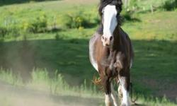 Thoroughbred - My Friend Bob - Medium - Young - Male - Horse My Friend Bob - TB gelding, 3yo chestnut, OTTB. Bob is currently in retraining to learn a new life off the track. He will make a wonderful riding horse CHARACTERISTICS: Breed: Thoroughbred Size: