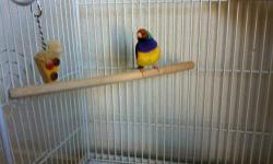 Three pairs of gouldian finches for sale. Green back ,orange face ,purple breast male and Green back ,orange face,white breast female -- proven breeding pair for $220. yellow back ,yellow face male and yellow back ,red face female pair for $220. yellow
