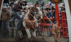 18 year old Paint Tie Down Horse. Has competed in the Canadian Pro Rodeo Association, Intercollegiate Rodeo Association in the South West Region, Alberta High School Rodeo Association, Canadian All Girl Rodeo Association, and many jackpots. He fits any