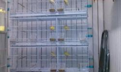 Pie de cría amarillo con jaulas, nidos y voladera, líneas puras de10 años de cría, pájaros súper saludables y anillados de asociación