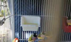 Im looking for someone to trade my 4 finches they are in good health young beautiful feathers and love singing, text me if you have something to trade for or for more info 9252061346 thanks