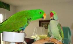 I HAVE A BOY AND GIRL PARROTS. THEY ARE NOT ALL THAT TAME. BUT WILL WARM UP TO YOU. THEY ARE HEALTHY. AND LOVE PARROT SNACKS. I AM SALE THEIR LARGE CAGE WITH THEM. THAT'S WHY IT IS A 100.00. OR JUST FOR THE PARROTS ITS 50.00. IF YOU ARE INTERESTING YOU