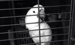 Approximate 3 years old, beautiful bird, with glass cage in included This ad was posted with the eBay Classifieds mobile app.