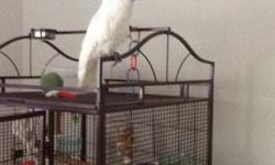 Hi I have a 2 year old handfed female umnrella cockatoo for sale, she is very tame and loveable comes with large cage and toys feel free to call or text 410-693-8584