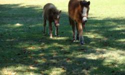 very cute mini colt come get him