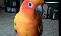 Prefer a sun conure but open to any..male..would like around the $150-$200 price range. Must be sweet. This ad was posted with the eBay Classifieds mobile app.
