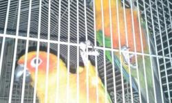 I was looking for some cinamon and turquoise green cheek conures if you have any availables email me pictures and price thanks.