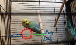 Looking for a nice deal on a pair of birds that includes the birds, their cage and toys. Please send me pictures of what you have along with your asking price. Thanks!