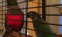 We have one baby white bellied caique available. Small deposit will hold till weaned.