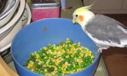 HI' MY NAME IS JULIA. I'M NOT A BREEDER NOR RESELLER. I WANT TO ADOPT A PARROT BECAUSE I CAN'T AFFORD TO PAY HIGH PRICES AT PETSTORE. I HAVE A LIMITED INCOME. I LOVE BIRDS, FOR ME THEY ARE THE MEDICINE I NEED TO FEEL BETTER AFTER MY HEART SUGURY. I OWN A