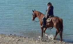 if you are looking for a great all around safe gelding here he is safe for your hubby, kiddos, and a true beginner VIDEO http://youtu.be/HlClqMin3YYMr. P is a 12yr 15hhs Quarter horse gelding he will do anything, ranch, branded off tons, gather cattle, dr