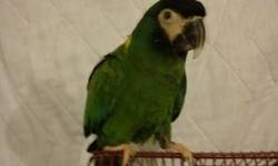 obo Happy Bird, about 20 years old. He Loves to dance and take showers. VERY vocal. Contact me for more pictures or information. 6074835947