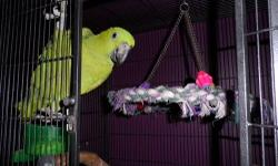 I have a pair I did not put together. It is a yellow nape who used to be someone's pet and would like to be my pet now. The yellow crown however was wild caught as a baby back about 20 years ago when parrots were still legally being imported into the USA