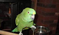 I have a very nice parrot that is if your a man, what I have learned is she does not like me because I am a women. I have tryed! She talks and talks alot...bird only