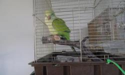 Baby quaker 2 1/2 month old ready for a new home