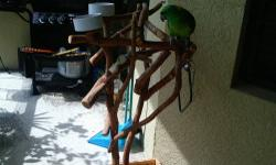 Beautiful, tame and talking Amazon parrot. He has been a wonderful pet but I must sell him due to my health issues. He comes with a fairly new cage, an Indoor/Outdoor Stand made of wood and all of his food. It will take some time before he bonds with a