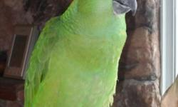 10 year old Yellow Naped Amazon. Very nice and quiet, healthy, recently groomed. Can speak a few words..quick learner. Cage with cabinet and travel carrier included.