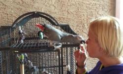 I have a 4 yrs old male african grey. He is hand tamed and has a large vocabulary over a few hundres words. Very healthy bird, full feathered. I also have an excellent huge cage as you can see in a picture for $300. If you are intersted let me know.