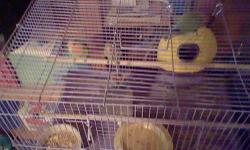 I have 5 young peachfaced lovebirds they are parent raised.They have green bodys and blue on their tails and red on their heads to their throats.I'm asking 25.00 each.If interested call me at 417-546-4877.Will deliver to walmart suppercenter in Branson on