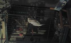 hello everyone. I'm trying to sell my young Quaker. we had it all summer long and now that my children went to school, i don't have time to clean after it cause i have a new born that i need to take care off. these birds run about 350 at the store. we