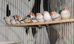 10 zebra finches not tame,outdoor raised $8 each or all 10 zebra finches for $60. Please bring a carrier. I will only meet in a public area. text or e-mail only 602-614-5287