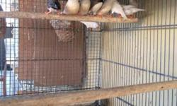Zebra finches $10 call 3058786531 This ad was posted with the eBay Classifieds mobile app.