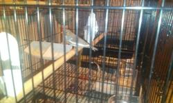 I have 5 Zebra Finches for sale. I have 3 males and 2 females. All are normal color but one male is a fawn. They are $10 each. 918-859-3250 call or text