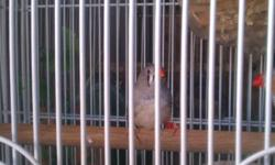 I want to buy as much as zebra finches as possible. as many in different colors possible. please call me you are interested in selling your zebra finches. Thank you.